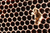 baby bee in honeycomb