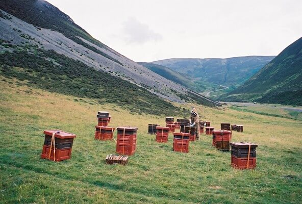 Beehives in Scottish valley