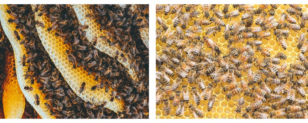bees in hive and on honeycomb