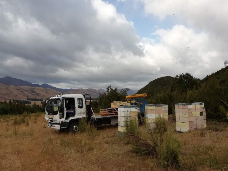 Collecting the manuka honey supers