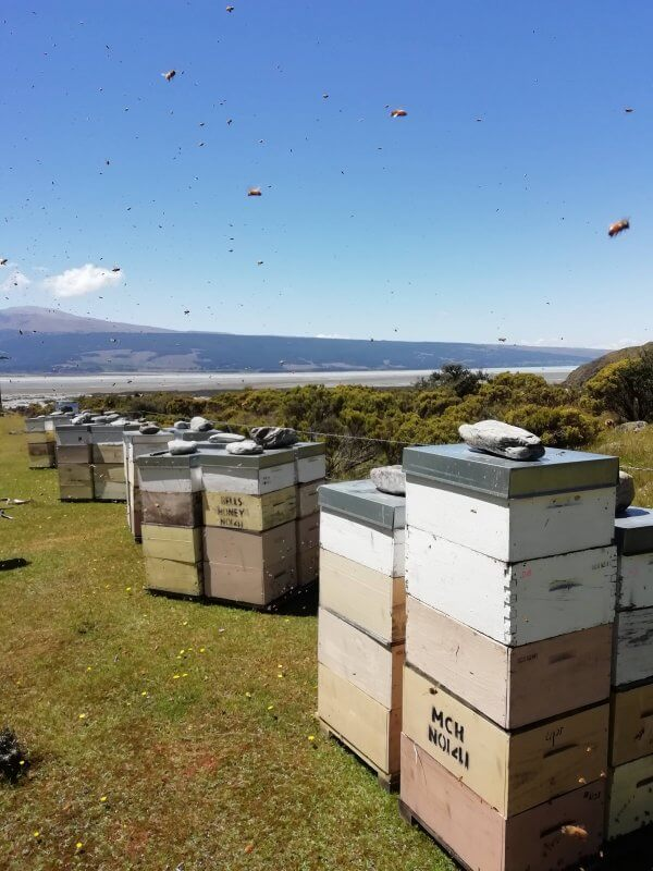 Hives of Manuka honey in New Zealand