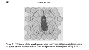 Von Frisch diagram of the honey bee waggle dance