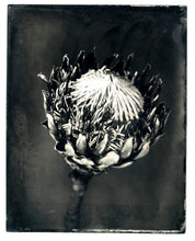 Load image into Gallery viewer, King Protea, 2020