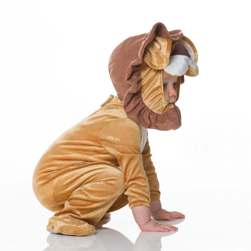 Lion Baby Fancy Dress Costume , Baby Costume - In Character, Ayshea Elliott  - 6