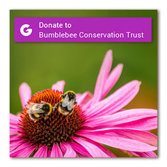 Bumblebee Conservation Trust donate button