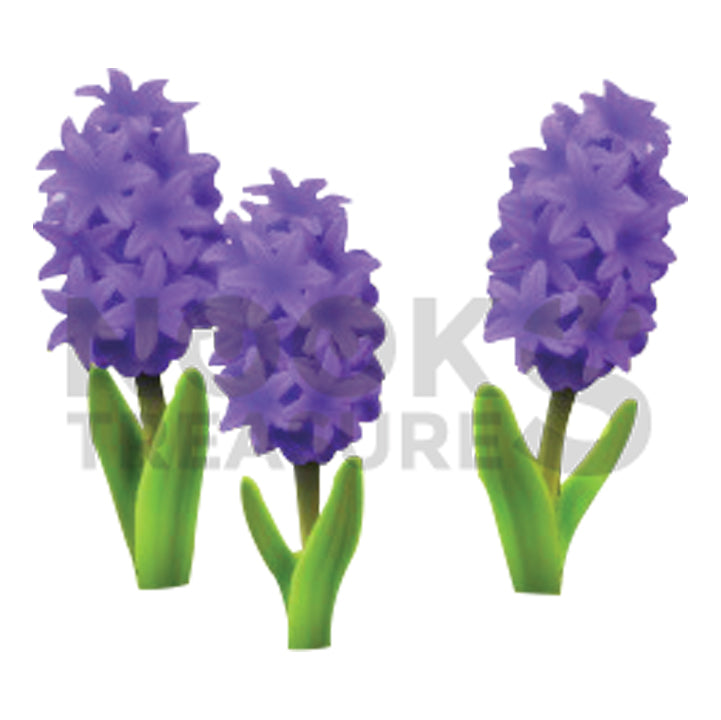 Purple-Hyacinth Plant