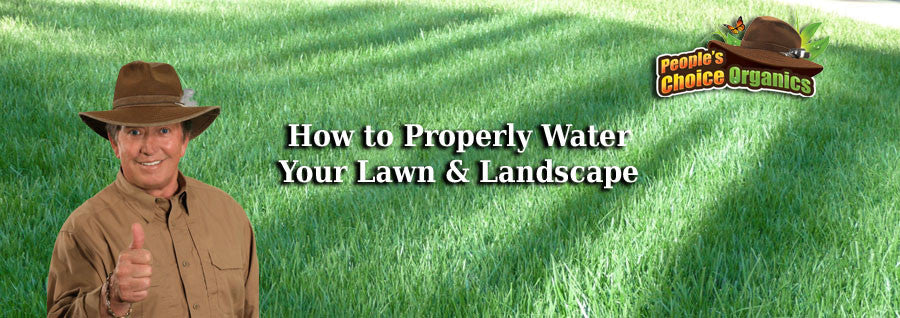 How To Properly Water Your Lawn & Landscape