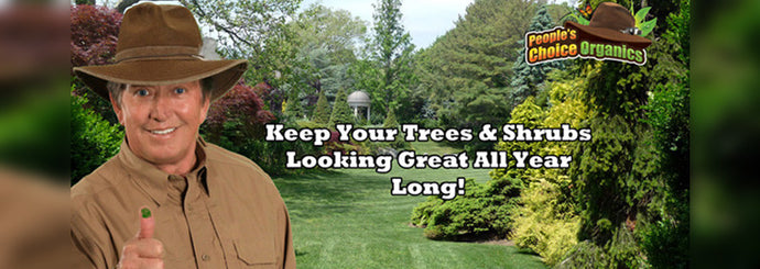 Annual Tree & Shrub Care Program