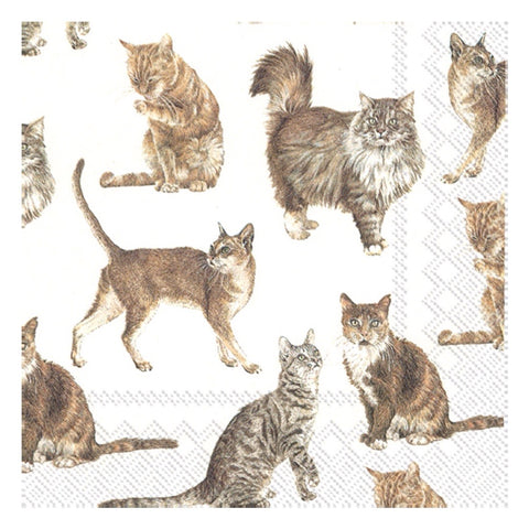 Large Napkins Cat 20 Pack