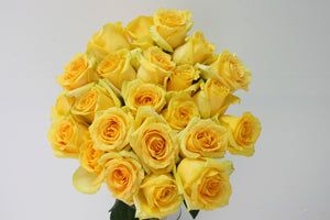 Roses 25 Premium Long Stem Yellow