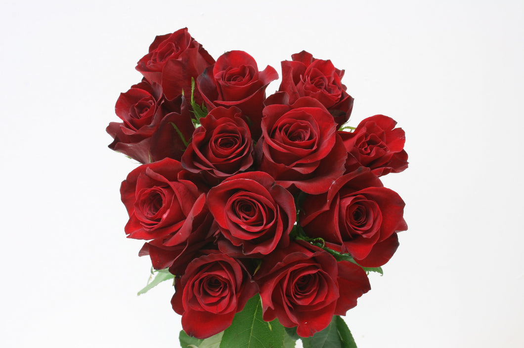 Roses Dozen Medium Stem Red