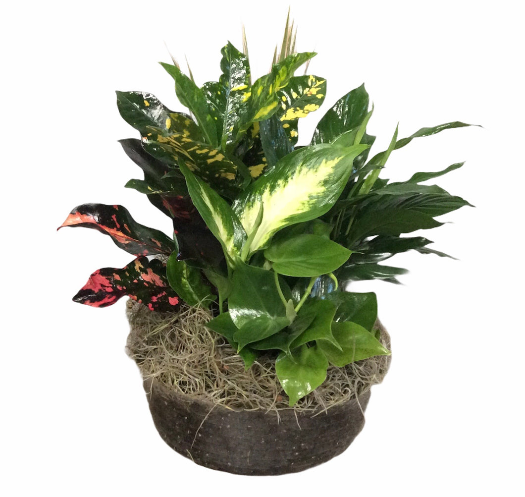Liner assorted foliage 10""