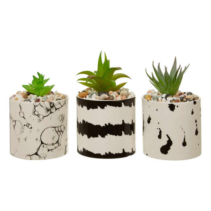 Mimo Set Of 3 White / Black Succulents - Decor Interiors -  House & Home