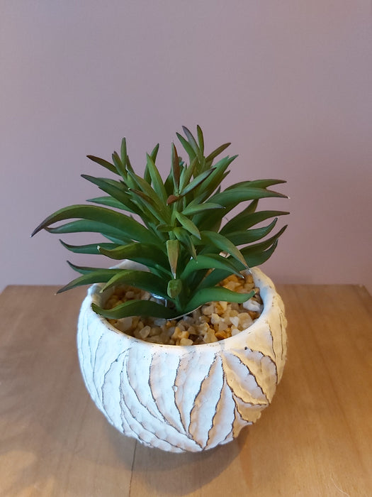 Faux Ginger Succulent in Cream Pot, Natural Green - Decor Interiors -  House & Home