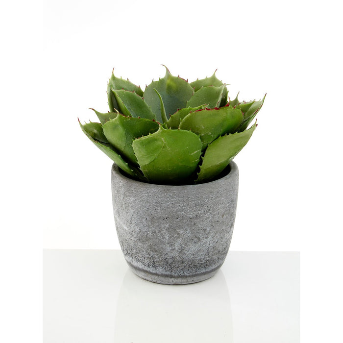 Large Fiori Succulent With Cement Pot - Decor Interiors -  House & Home