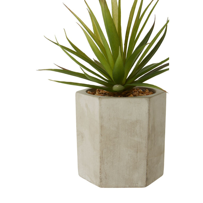 Fiori Sword Grass Succulent - Decor Interiors -  House & Home
