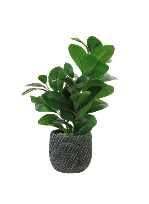 Faux Rubber Plant in a Grey Mesh Ceramic Pot - Decor Interiors -  House & Home