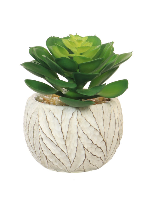 Faux Succulent in Cream Pot, Natural Green - Decor Interiors -  House & Home