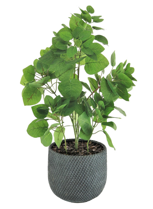 Potted Apple Leaf In Grey Mesh Pot - Decor Interiors -  House & Home