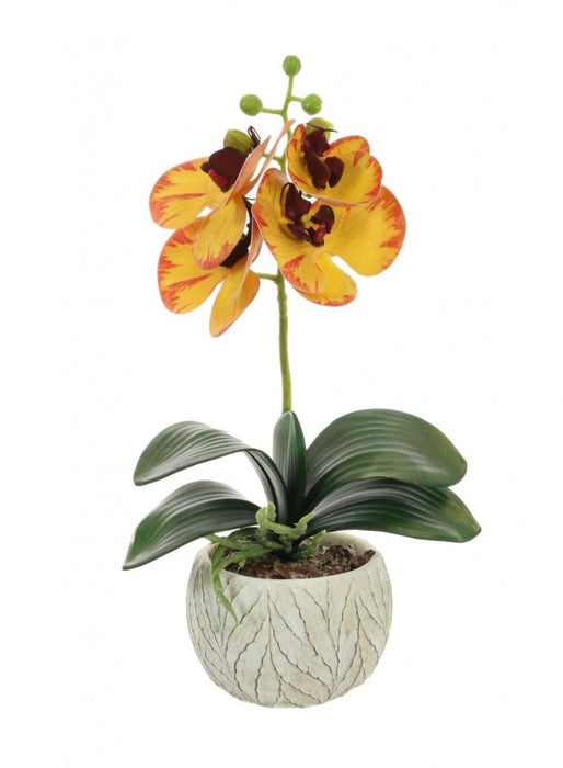 Mini Blazed Yellow Phalaenopsis Orchid Arrangement - Decor Interiors -  House & Home