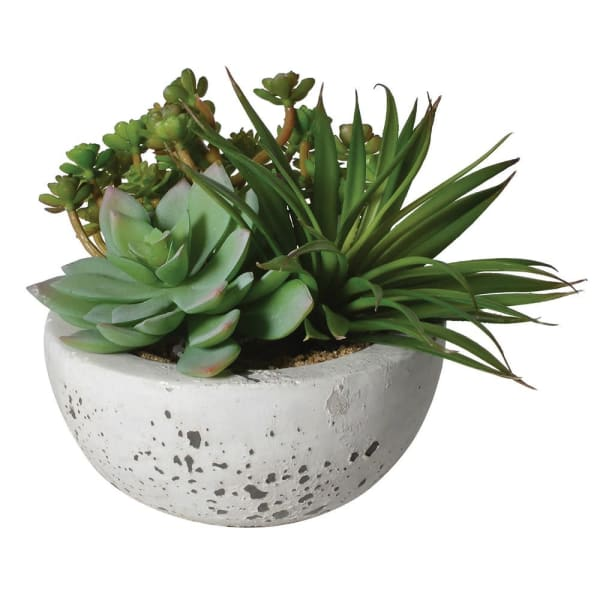 Arranged Green Succulents in a Cement Bowl - Decor Interiors -  House & Home