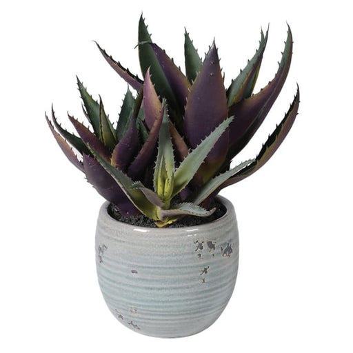 Green and Purple Spikey Aloe Vera in Cream Ribbed Clay Pot - Decor Interiors -  House & Home