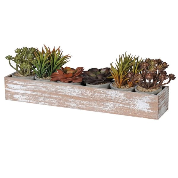 Set of 6 Assorted Succulents in Pots Displayed in Long Wooden Box - Decor Interiors -  House & Home