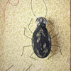 Stitched Beetle with Ann Wood / Thursday, October 17th / 6-9pm