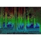 Forestry Module (LiDAR360 add on)