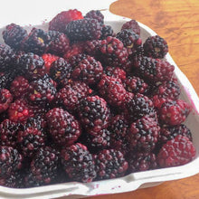 Load image into Gallery viewer, Mora Organica Fresca (Organic Blackberry Fresh) 500 gr