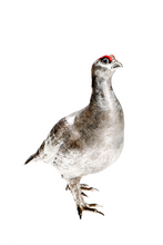 Laden Sie das Bild in den Galerie-Viewer, The Glorious 12th - Grouse - Sterlingsilber, handemailliert