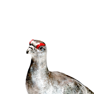 The Glorious 12th - Grouse - Sterlingsilber, handemailliert