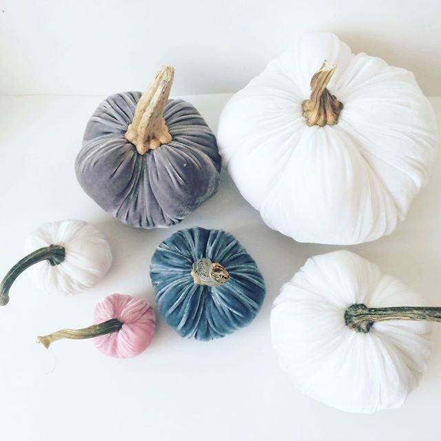 Dusty Blue Velvet Pumpkin with Real Stem