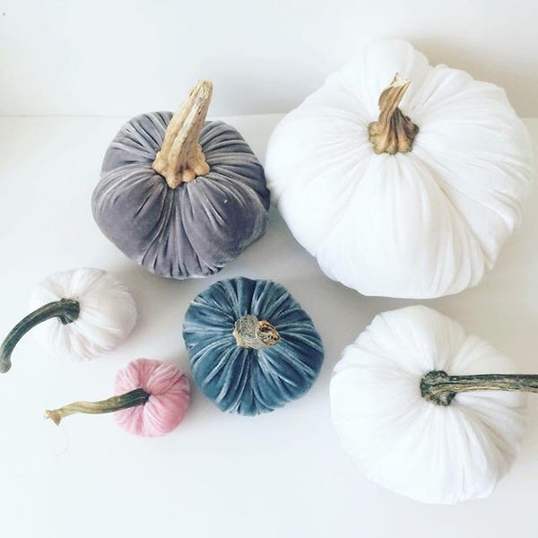 Dusty Slate Blue Velvet Pumpkin with Real Stem