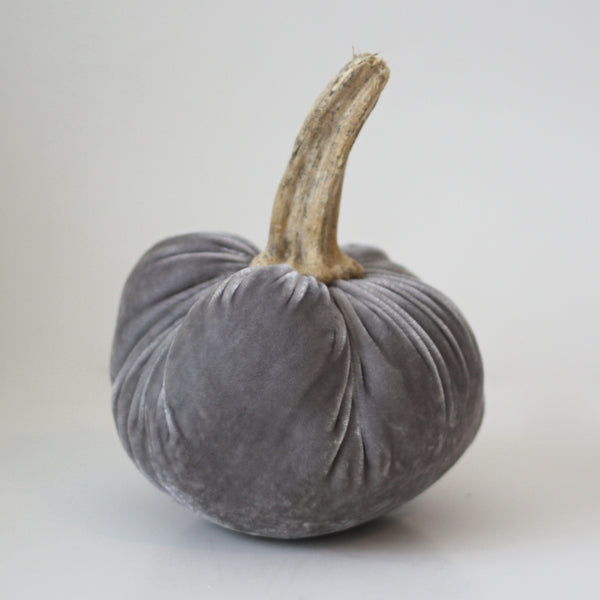 Gray Velvet Pumpkin with Real Stem