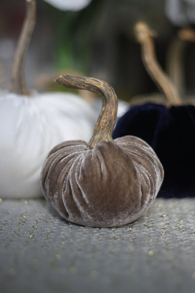 Taupe Velvet Pumpkin with Real Stem