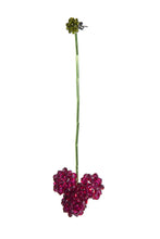 Load image into Gallery viewer, CELOSIA CRISTATA - Single earring