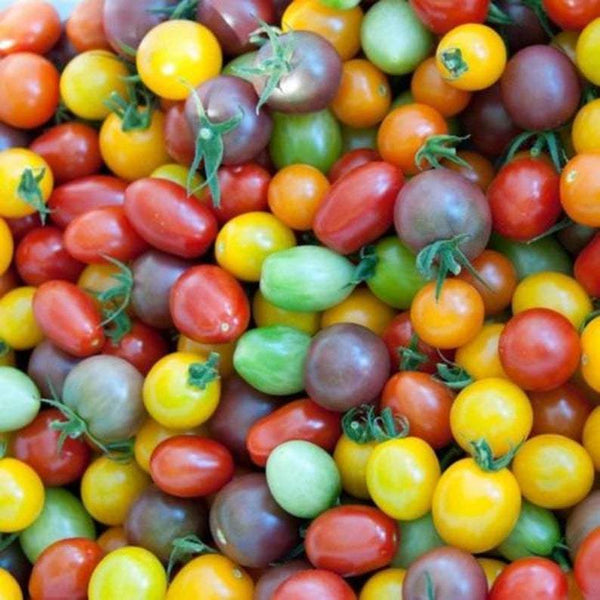 Cherry Tomatoes, Basket