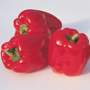 Ace Bell Pepper
