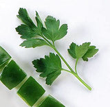 Parsley - Italian