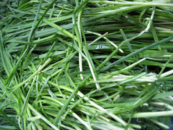 Chinese Chives (Garlic Chives)