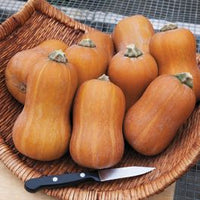 Copy of Honeynut Squash