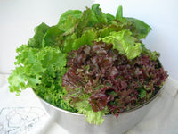 Lettuce - Mixed Pack
