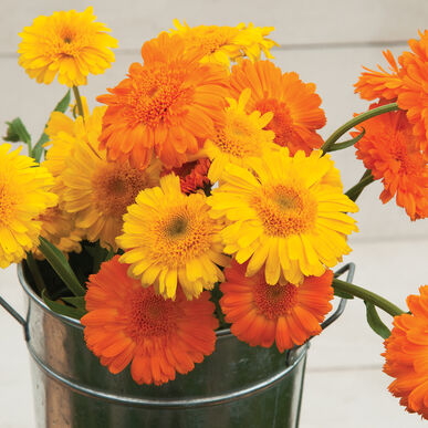 Calendula - Princess Mix