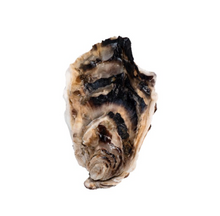 Load image into Gallery viewer, WILD PEACOCK Saldanha Oysters - Large [70g-99g] - Together Store South Africa