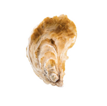 Load image into Gallery viewer, WILD PEACOCK Saldanha Oysters - Medium [50g-69g] - Together Store South Africa