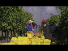 Load and play video in Gallery viewer, ANTHONIJ RUPERT Cabernet Franc 750ml