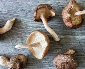 WILD PEACOCK Mushroom - Fresh Shiitake (150g) - Together Store South Africa