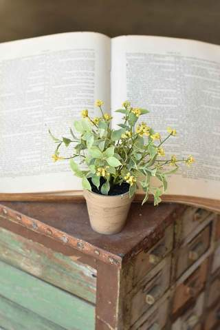 Potted Happy Harmony | Yellow