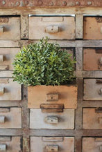 Load image into Gallery viewer, New England Boxwood